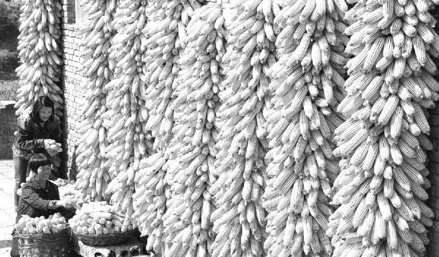 在政策支撑力度加大、供给侧改革深化等因素的驱动下,近期玉米价格走势向好,预计后期涨势延续。